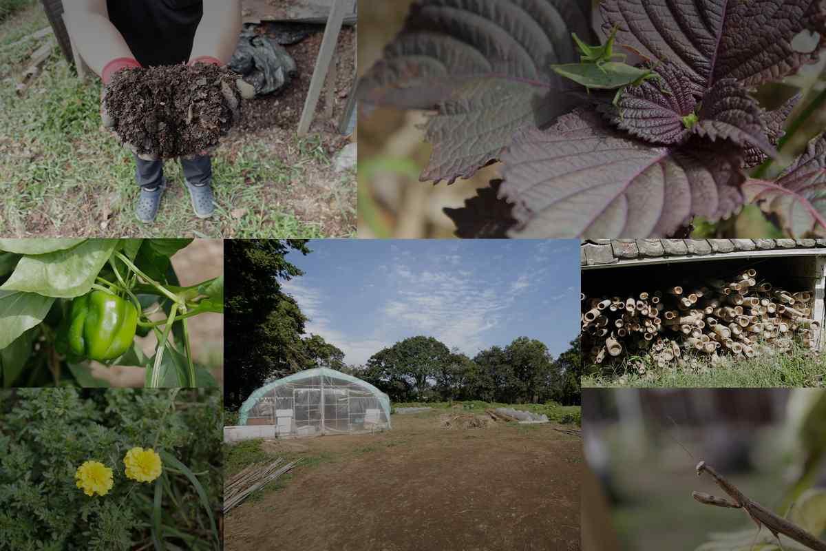 農薬化学肥料不使用の、やさしい野菜へのこだわり