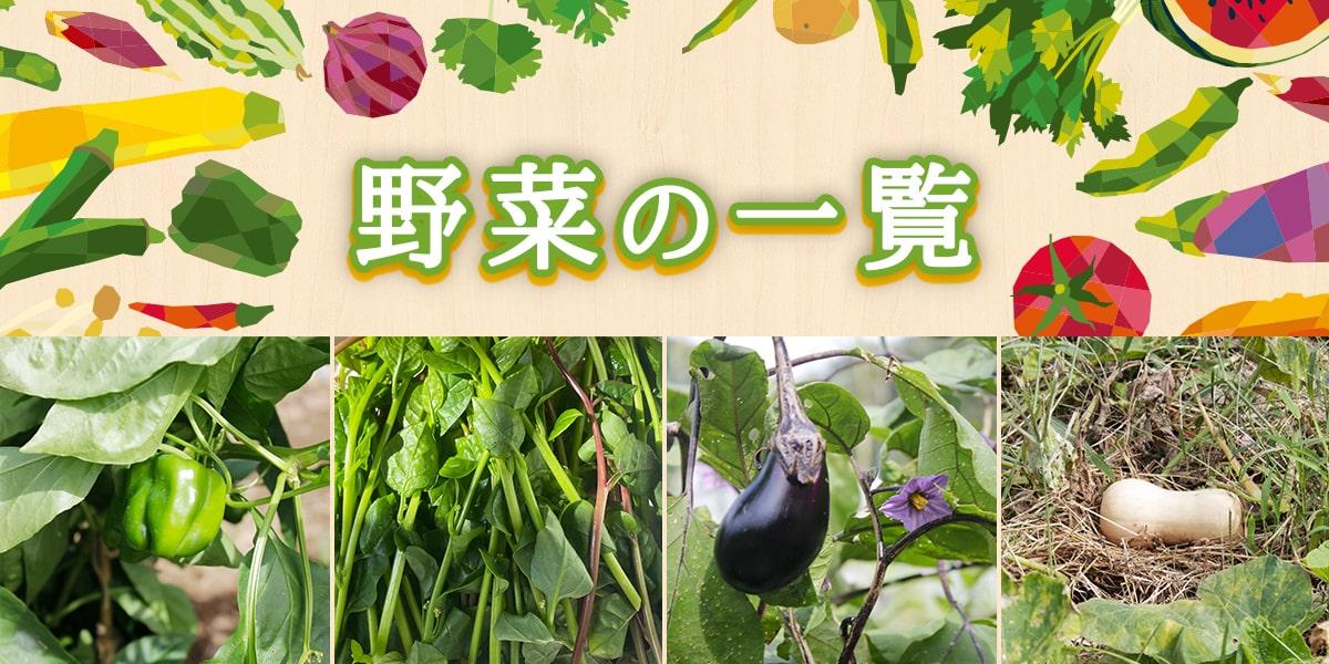 野菜の一覧